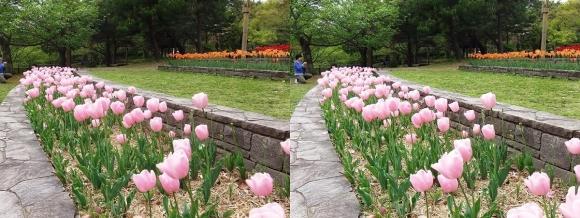 鶴見緑地公園の花⑰(平行法)