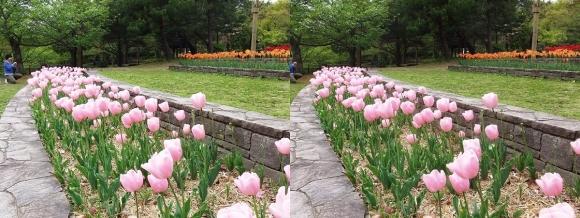 鶴見緑地公園の花⑰(交差法)