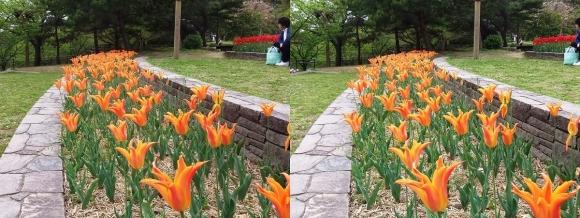 鶴見緑地公園の花⑯(平行法)