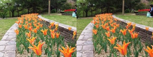 鶴見緑地公園の花⑯(交差法)