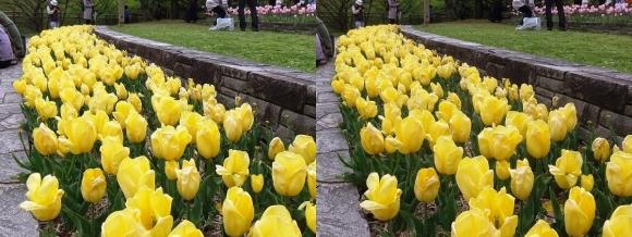 鶴見緑地公園の花⑮(交差法)
