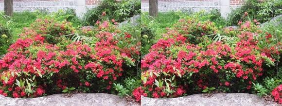 鶴見緑地公園の花⑭(平行法)