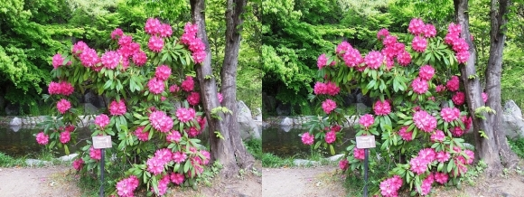 鶴見緑地公園の花⑬(平行法)