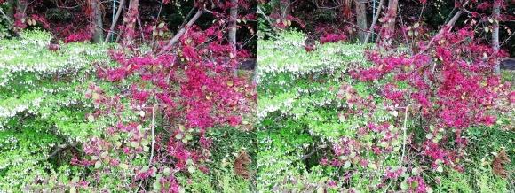 鶴見緑地公園の花⑫(平行法)