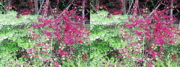 鶴見緑地公園の花⑫(交差法)