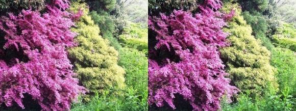 鶴見緑地公園の花⑪(平行法)
