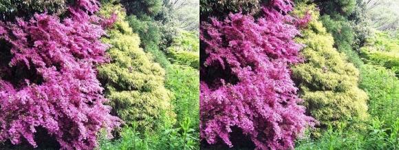 鶴見緑地公園の花⑪(交差法)