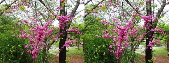 鶴見緑地公園の花⑩(平行法)