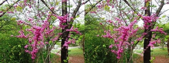 鶴見緑地公園の花⑩(交差法)