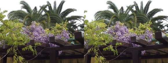 鶴見緑地公園の花⑨(平行法)