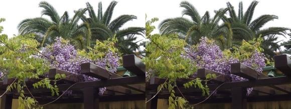 鶴見緑地公園の花⑨(交差法)