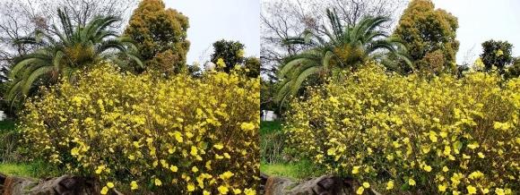 鶴見緑地公園の花⑧(平行法)