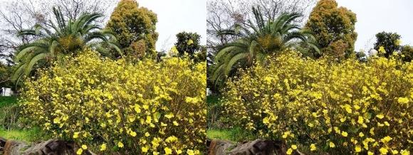 鶴見緑地公園の花⑧(交差法)
