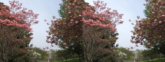 鶴見緑地公園の花⑦(平行法)