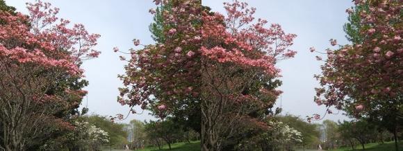 鶴見緑地公園の花⑦(交差法)