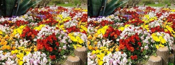 鶴見緑地公園の花⑥(平行法)
