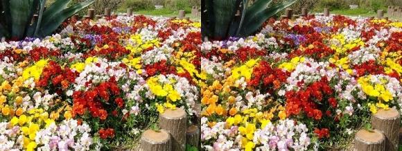鶴見緑地公園の花⑥(交差法)