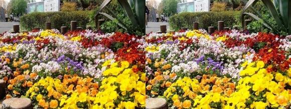 鶴見緑地公園の花⑤(平行法)