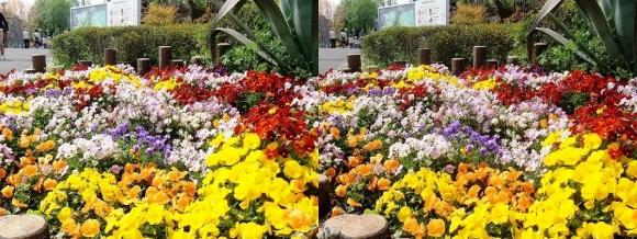 鶴見緑地公園の花⑤(交差法)