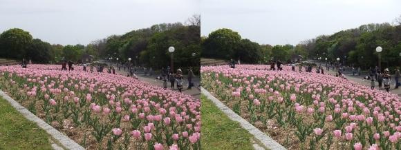 鶴見緑地公園の花④(平行法)