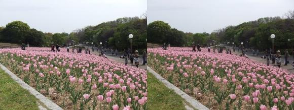 鶴見緑地公園の花④(交差法)