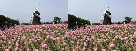 鶴見緑地公園の花③(平行法)