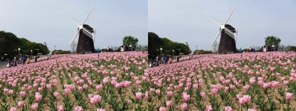 鶴見緑地公園の花③(交差法)