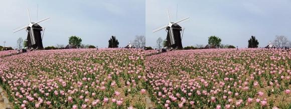 鶴見緑地公園の花②(交差法)