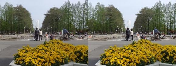 鶴見緑地公園の花①(平行法)