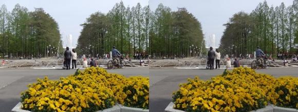鶴見緑地公園の花①(交差法)