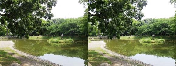 住吉公園①(平行法)