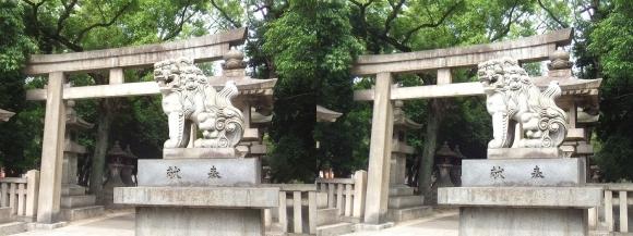 住吉大社南脇参道狛犬と鳥居(平行法)