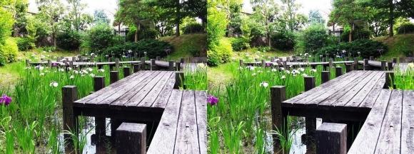 池田城跡公園⑨(平行法)