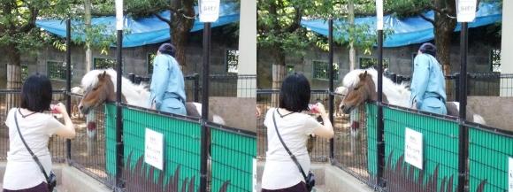 五月山動物園④(平行法)