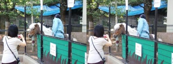五月山動物園④(交差法)