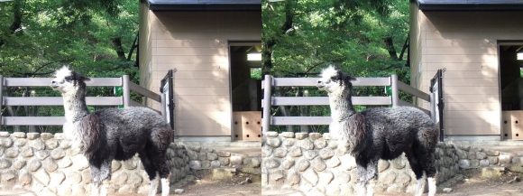 五月山動物園③(平行法)