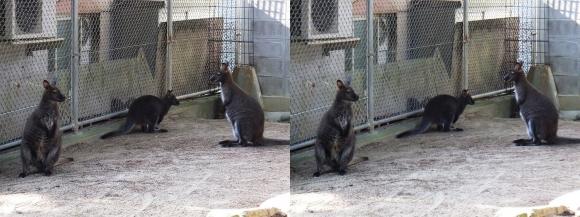 五月山動物園①(平行法)