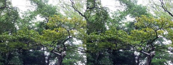 太閤園 庭園の緑②(平行法)