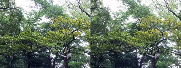 太閤園 庭園の緑②(交差法)