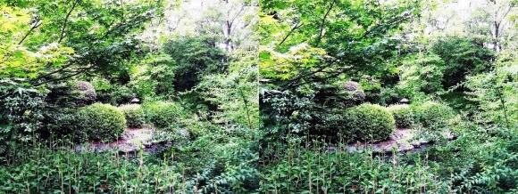 太閤園 庭園の緑①(平行法)
