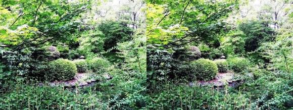 太閤園 庭園の緑①(交差法)