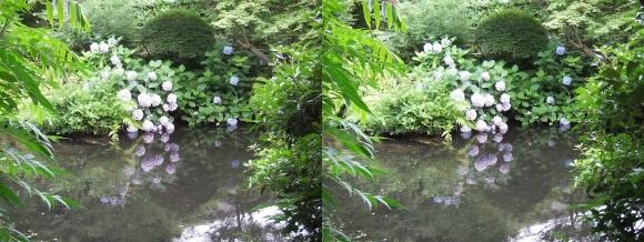 太閤園 紫陽花②(平行法)