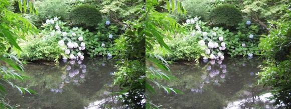 太閤園 紫陽花②(交差法)