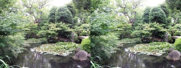 太閤園 睡蓮池②(平行法)
