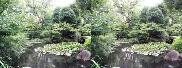 太閤園 睡蓮池②(交差法)