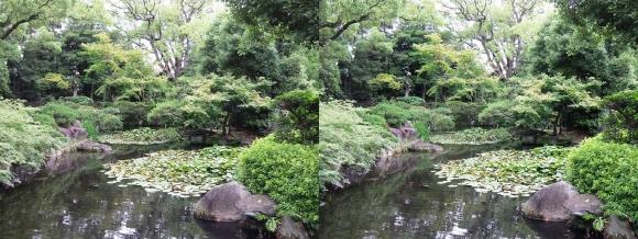 太閤園 睡蓮池①(平行法)