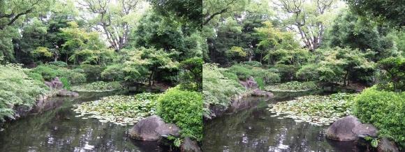 太閤園 睡蓮池①(交差法)
