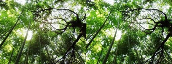 竹林の小径⑥(平行法)