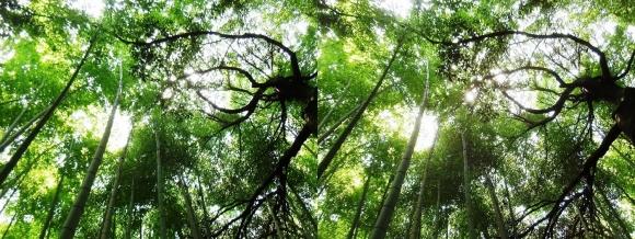 竹林の小径⑥(交差法)