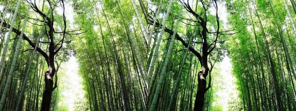 竹林の小径⑤(平行法)